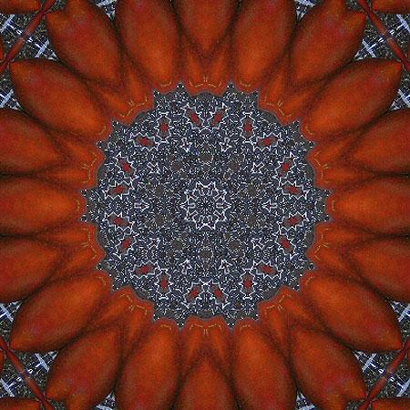 tomatenblume_01.jpg