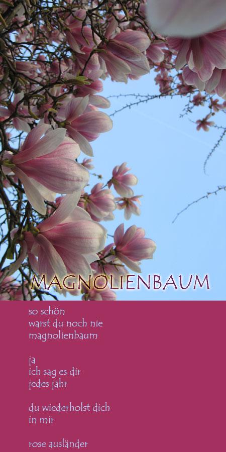 magnolie_01.jpg