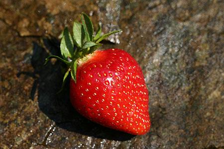 fraise_monamour.jpg