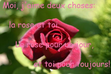 la_vie_en_rose_03.jpg