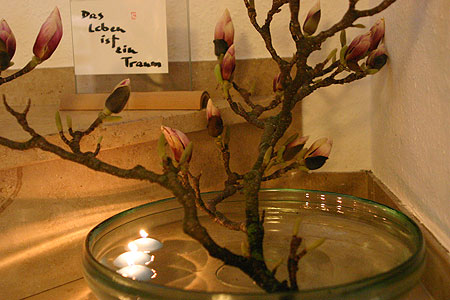 magnolie.jpg