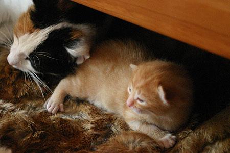 kitten_01.jpg