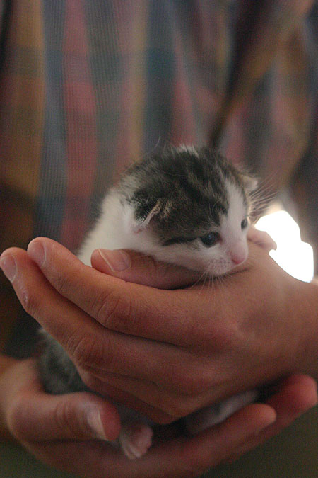 kitten_02.jpg