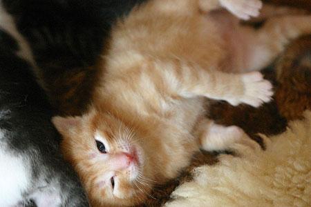 kitten_03.jpg