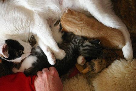 kitten_05.jpg