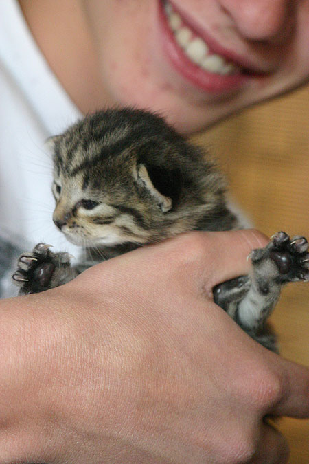 kitten_06.jpg