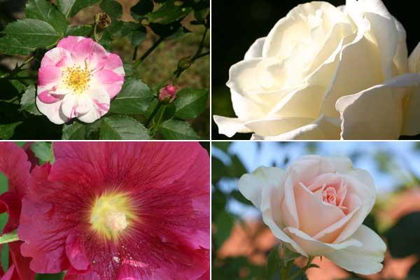 rosenblueschen_03
