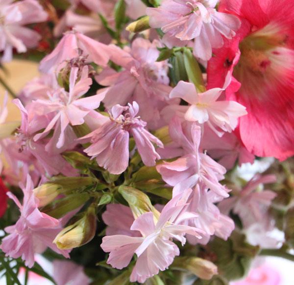 Blumen_rosa_04