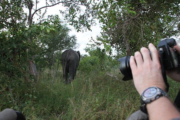 elefant_01