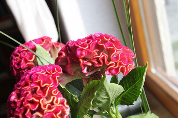 überraschungsblumen1